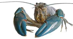 Yabby Consultation including species identification