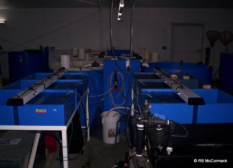 GFH First larval rearing tanks