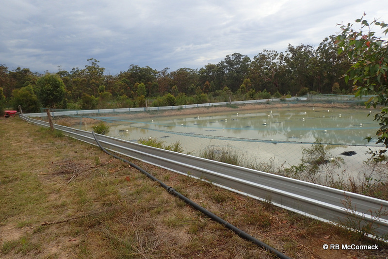 Commercial yabby pond